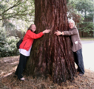 Ann with Roger hugging a Sequoia tree